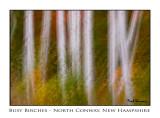 #0442    Busy  Birches