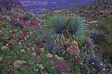 Apache Trail Cactus and Friends