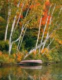 Canoe & Birch