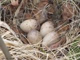 Nids - 2008 - 2009 - Nests