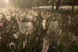 Spider webs - Spinnenwebben