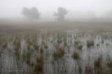 Fog - Mist