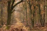Oak and Bracken Fern - Eik en adelaarsvaren