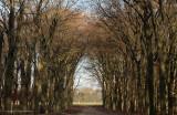 Gothic Gate - Gotische poort