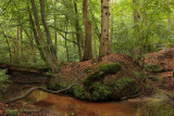 Red brook - Rode sprengenbeek