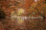 Pond autumn