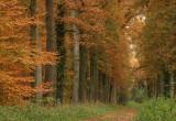 Oaklane autumn