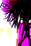 Still Purple