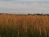 Iowa's Doolittle Prairie