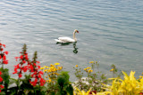 052_Montreux.jpg