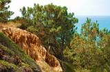 Torrey Pines cliff.JPG
