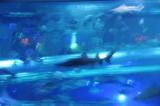 Golden Nugget shark tank.JPG