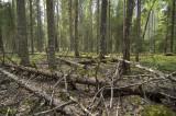 Pyhahakki_Conserved-Forest.jpg