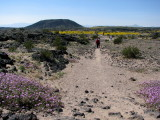 Trail to Amboy crater