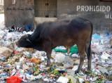 Seres humanos en la basura .Barranquilla ,Colombia