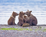 88009 - Grizzly Cubs