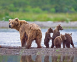 88032  - Sow with 4 cubs