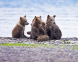 88011 - Grizzly Cubs