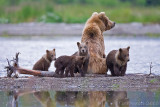 88076 - Sow with cubs