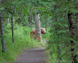 40-11700 - Bear on the trail