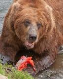 40-11736 - Eating salmon