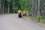 40-12073 - Bears on the road