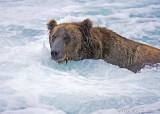87197 - Jacuzzi Bear