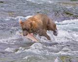 40-12486 - Bear catching salmon