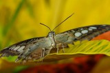 Papiliorama, Kerzers, Suisse