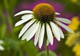 flower - botanical gardens
