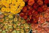 roses - farmer's market