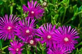 flowers - botanical gardens