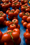 tomatoes on blue