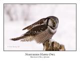 Northern Hawk Owl-022