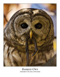 Barred Owl-004