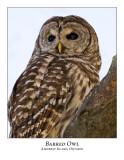 Barred Owl-005