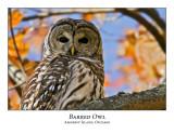 Barred Owl-009