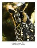 Long-eared Owl-006