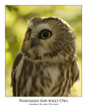 Northern Saw-Whet Owl-006
