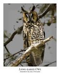 Long-eared Owl-010