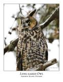 Long-eared Owl-012