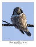 Northern Hawk-Owl-023