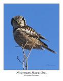 Northern Hawk-Owl-024