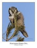 Northern Hawk-Owl-028