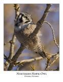 Northern Hawk-Owl-031