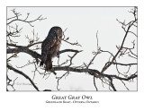 Great Gray Owl-004