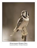 Northern Hawk-Owl-037