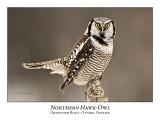Northern Hawk-Owl-038