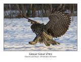 Great Gray Owl-005