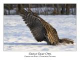 Great Gray Owl-006